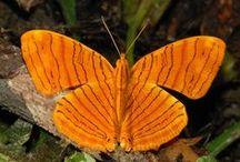 arancio animali