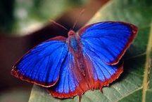 blu animali