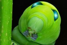 verde animali
