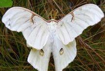bianco animali