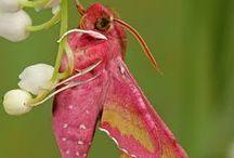 rosa animali