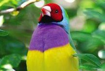 colori animali