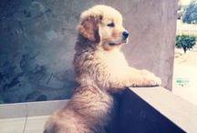 Doggies! / by Katherine Swathwood