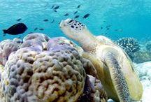 Beautiful Ocean Creatures / Ocean Life as we have never seen