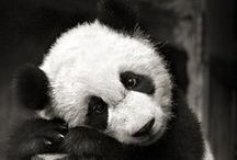 Los Animales / mostly wolves and pandas, let's be real. / by Katherine Swathwood