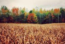 Fall / by Daria Smith