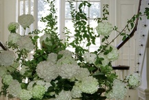 Floral Ideas / ideas for floral arrangement in casual and elegant setting  / by Bill Dong