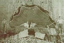 Early Logging / by Lonnie McCoy