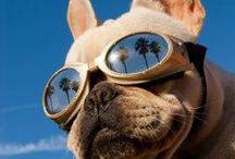 Summer Dogs / The best of #summerdogs