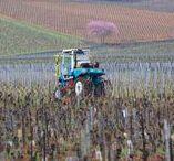 Work in the vineyard, prace w winnicy / Burgundia w obiektywie, wiosenne prace w winnicach