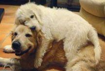 Furry Friends / Gotta Love Them! / by Julie Robertello - Rundle