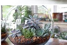 Want: Terrariums