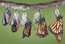 BUTTERflys... Moths tooo... / ... there are17,000 different species of butterflies….. / by Pat Judge