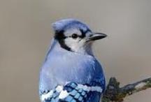 Birds I see