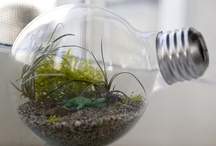 DIY: Light Bulbs