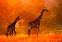 Nature is enchanting. / by Kelsey Prosser Tieszen