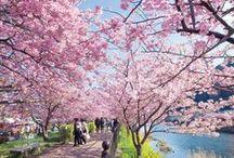 Izu la péninsulaire / Au Sud de Tokyo se trouve la magnifique péninsule d'Izu avec ses décors naturels à couper le souffle.