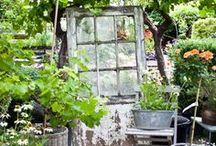 Garden Ideas / by Jamie Rex