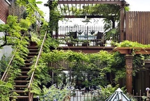 artisTREEscapes:  Rooftop Gardens / Check out and contact my Landscape Design pages:  http://www.artisTREEscapes.com/facebook, www.artisTREEscapes.com or email:  artisTREEscapes@gmail.com. / by artistreEscapes Island Garden Venue, LLC