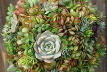 Plants / by Sarah Webb