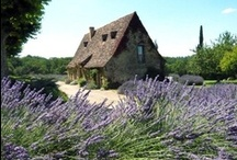 Heidi's Dream Haus / This is the Best of the Best images that my old soul has picked for my dream house. / by Heidi Jaster