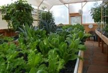 Aquaponics, Aquaculture & Hydroponics / by Cindy Briedis