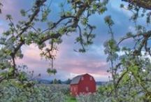 Oregon Food Trips / There's no better way to celebrate all of Oregon's culinary goodness than traveling around the state and seeing where it grows. So come on out and taste the Oregon food scene for yourself. If you like food, you're invited.