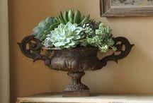 Succulents & Urns
