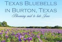 Burton, Texas / All Things In The Greater Burton, Texas Area. / by Heidi Jaster