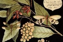 insects / vintage maps/cards with butterflys and insects