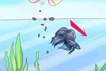 Betta Fish / by Coco Park