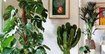 Cactos, suculentas e plantas em geral -  Cactus, succulents and plants in general