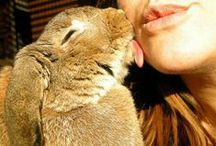 Animal♥lovers / Inconditionnel love...