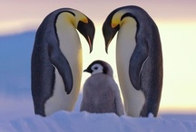 Amazing Animals / Why I love animals