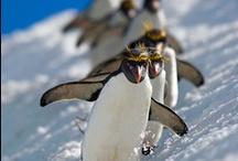 I love Penguins!!!