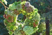 Wreaths / All kinds of wreaths. #diy #crafts #wreath
