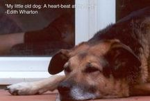 "Heartbeat at My Feet / ""My little dog - a heartbeat at my feet."" / by Mercedes"
