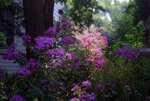 Purple / by Mercedes