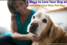 Lisa Spector's Blogs on iCalmPetcom / My musings on dogs: Creating a healthy sound environment for you and your dogs, humor, positive reinforcement dog training, sharing my home with two Labradors, dog agility, dogs and music, and everything dog!