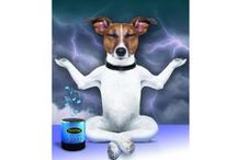 iCalmDog / $79.95 The portable solution to canine anxiety... anywhere!