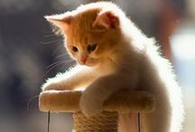 Cute pets and Animals / all these lovable pets
