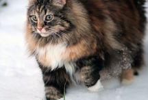 Cat Love / by Maggi K