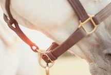 Inspiration - Equestrian