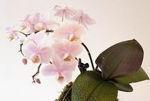 Orchids / The love of orchids