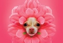 CHIHUAHUA'S GONE WILD / by Anne-Marie Weber