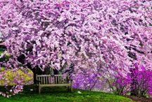 Nature/Flowers