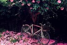 J'adore Rose