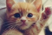 cute and amazing animals i love