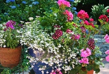 Gorgeous Gardens and Great Ideas