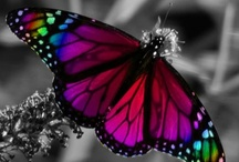 Amazing Butterflies / by Donna Shubrook Heacock